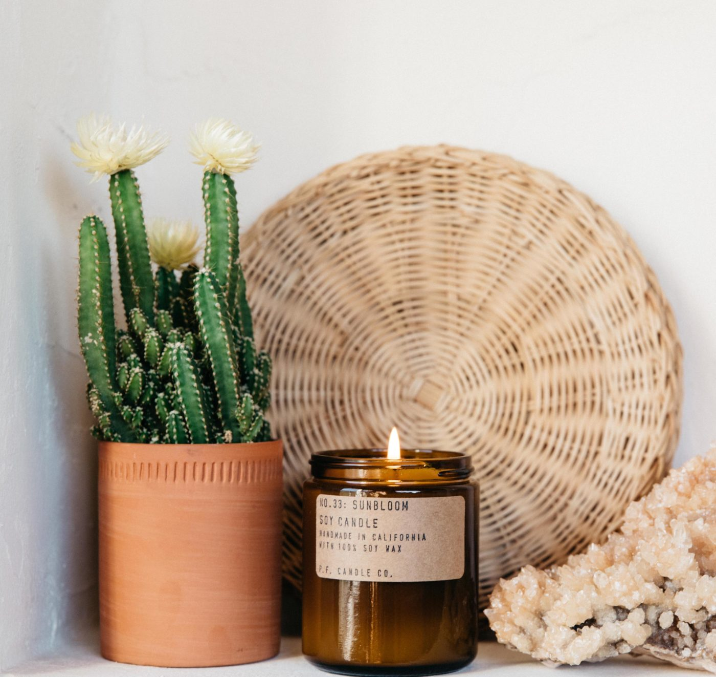 sunbloom scented candle beside cactus