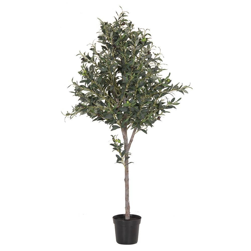 OLIVE TREE IN BLACK POT
